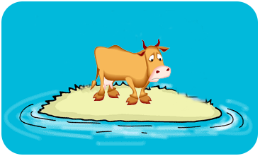 Stranded Cow